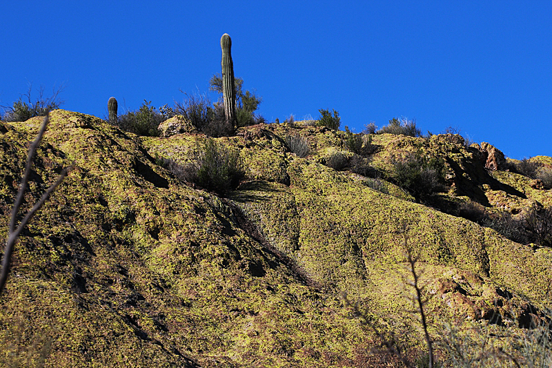 Goldfield Mountains