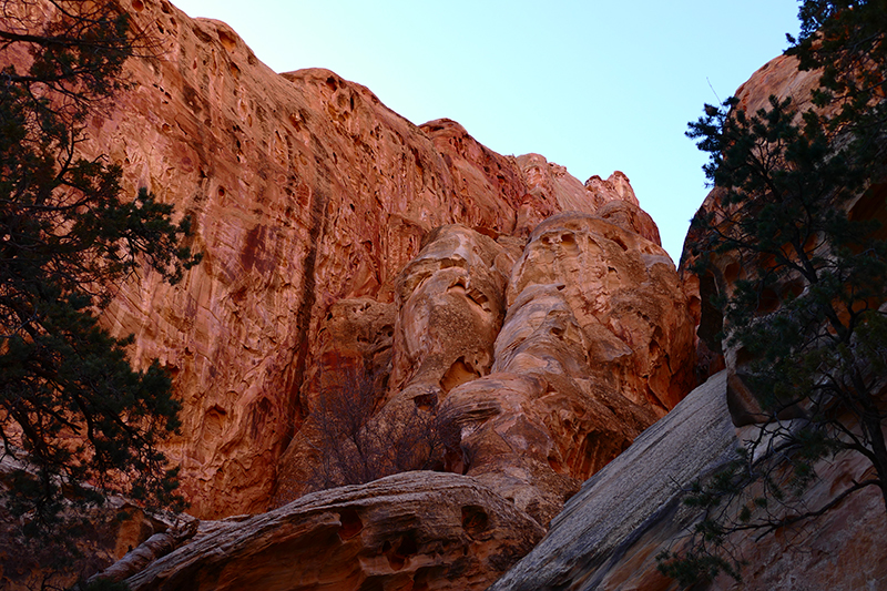 Cohab Canyon [Capitol Reef National Park]