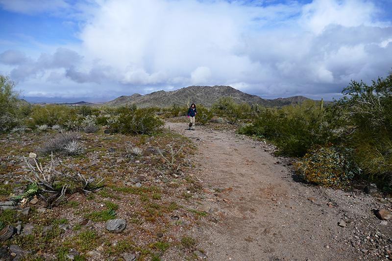 Estrella Mountains Regional Park [Avondale]