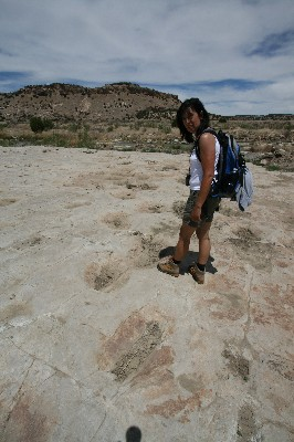 Dinosaur Tracks [Picketwire Canyon]