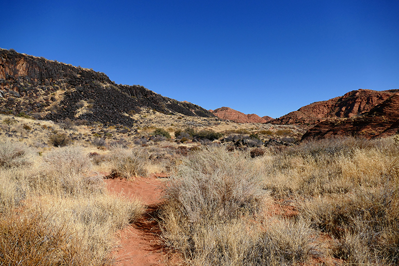 Grapevine Trail [Red Cliffs National Conservation Area]