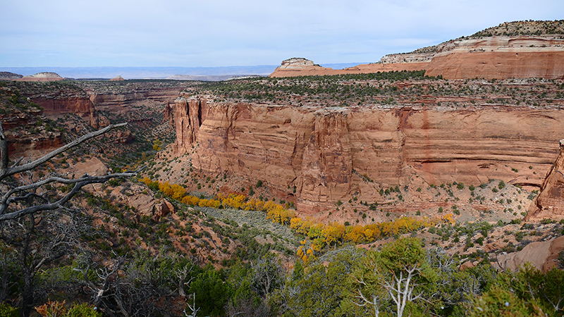 Knowles Canyon [McInnis Canyons National Conservation Area]