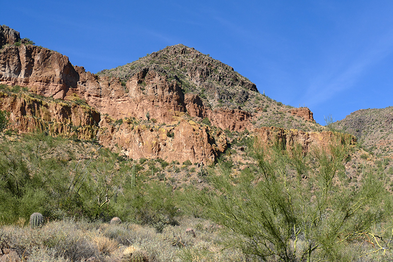 Pass Mountain Trail [Goldfield Mountains]