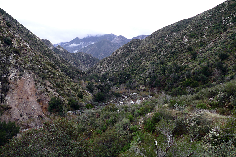 Trail Canyon and Falls [Angeles National Forest]