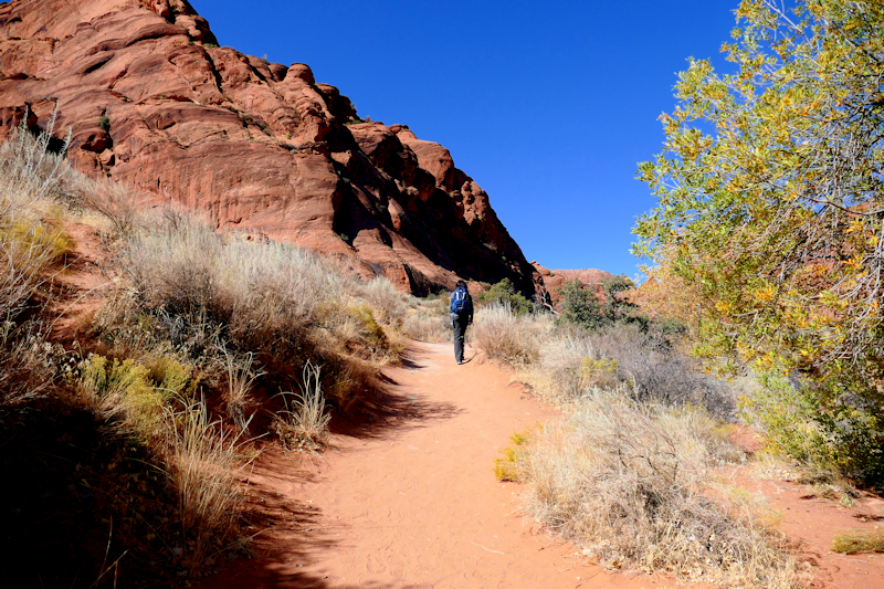 Water Creek Canyon [Red Cliffs Recreation Area - Dixie National Forest]
