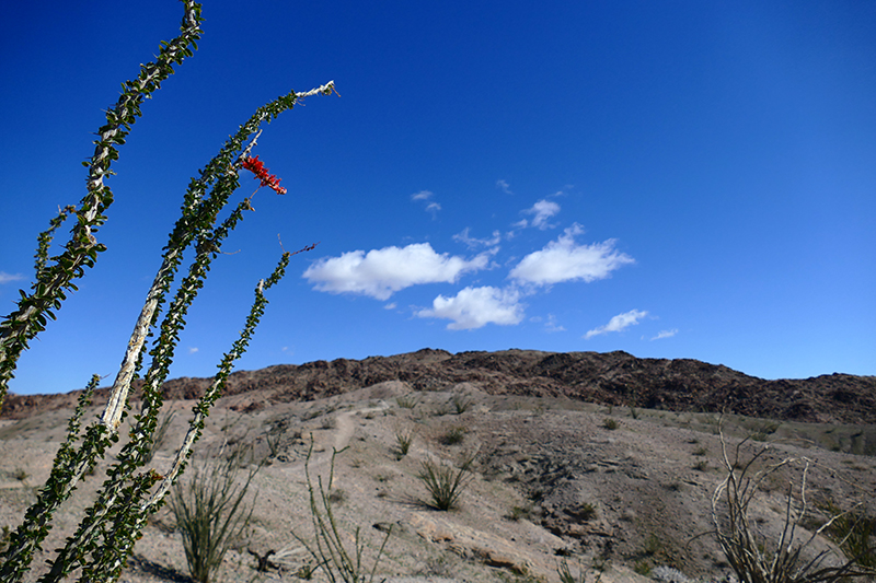 West Butte [Anza Borrego State Park]